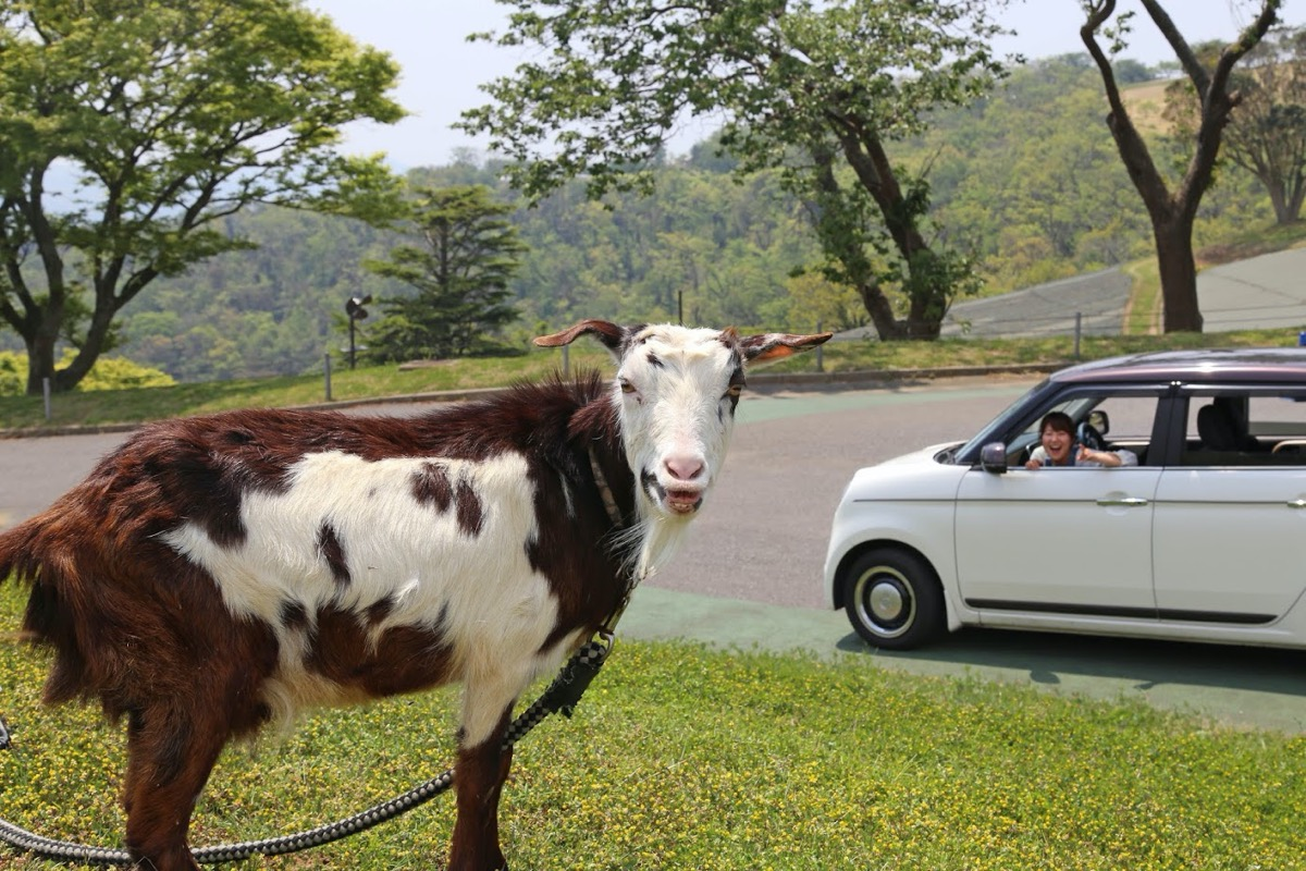 マザー 牧場 ドライブ スルー